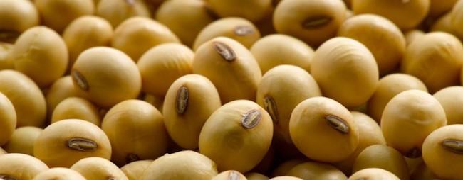 protein kaynağı besin soya