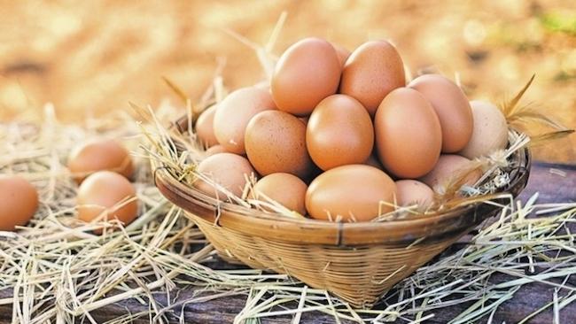 protein kaynağı besin yumurta